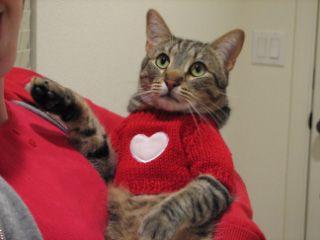 hearty kitty.jpg
