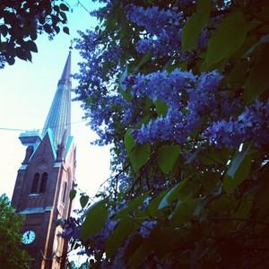 lilacs_in_oslo.jpg