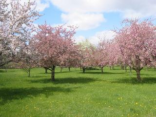 orchard.jpg